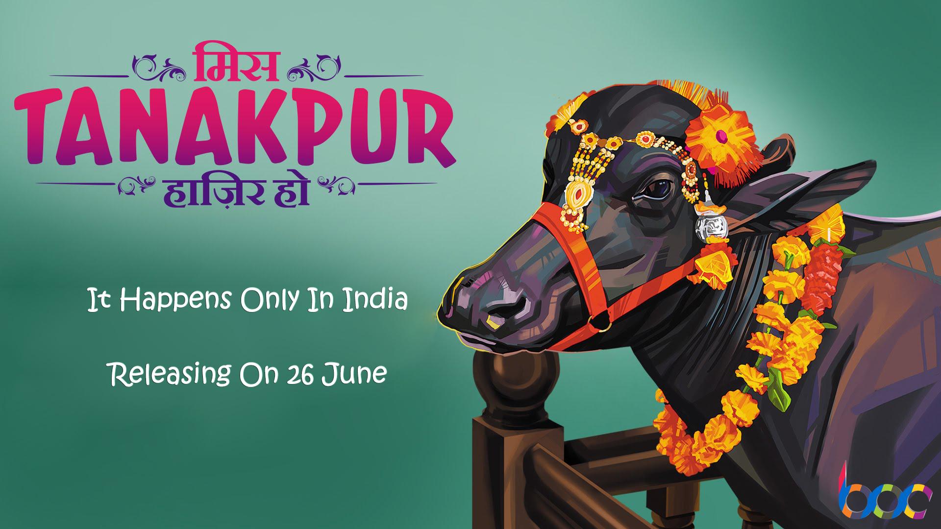miss tanakpur haazir ho movie collection