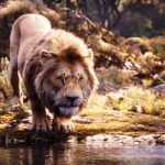 5th Day Collection of The Lion King, Crosses 69.50 Crores on Tuesday in India